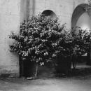 courtyard-sfai-a